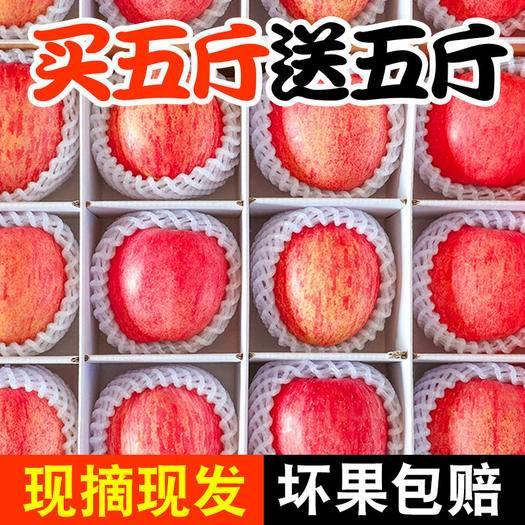 西安 【破损包赔】陕西脆甜红富士苹果冰糖心新鲜水果整箱批发10斤