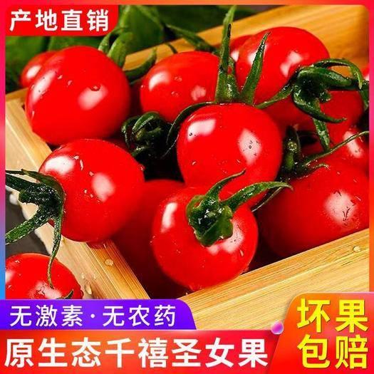 聊城莘县 千禧圣女果新鲜小番茄现摘 樱桃小西红柿对接微商电商一件代发