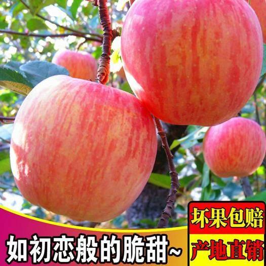 禮泉縣 陜西紅富士蘋果水果10斤新鮮當季紅富士丑平果包郵一件代發