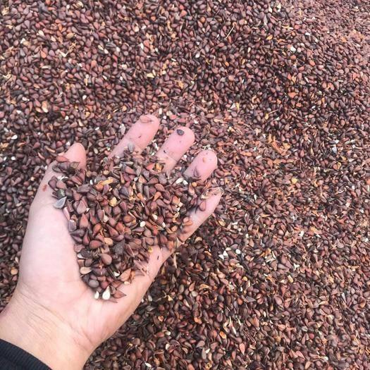 达州宣汉县 销售药用皱皮木瓜种子,木瓜苗,鲜木瓜,木瓜饮片等,