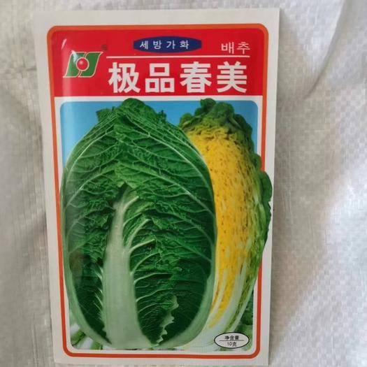 郑州二七区 韩国进口杂交种 春美黄心娃娃菜种子 极早熟 单球1千克