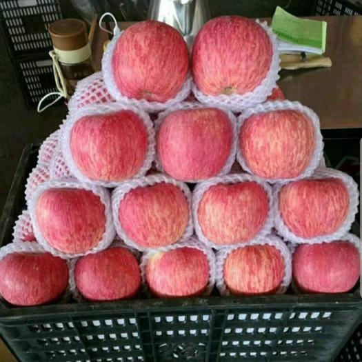 洛川县 陕西洛川一件代发脆甜红富士苹果特价秒杀特级80果包邮大宗批发