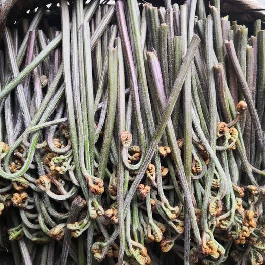 貴陽修文縣 產品新鮮現摘現賣干蕨菜
