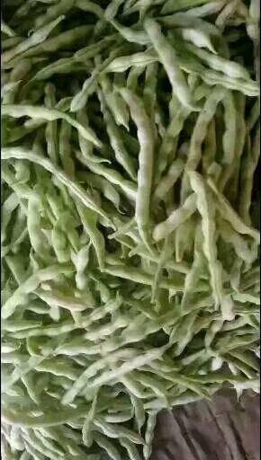 臨沂沂水縣 山東九粒白蕓豆上市了