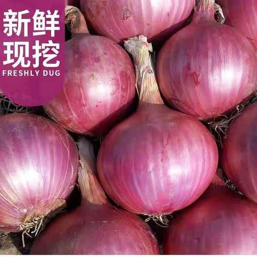 玉溪华宁县 云南红皮洋葱紫皮洋葱一件代发5斤9斤