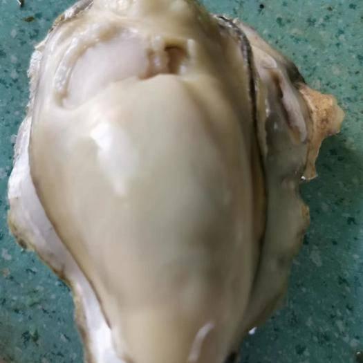 乳山市乳山牡蠣 保證品質    不肥賠付  自養自銷