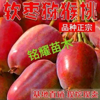 软枣猕猴桃苗 保证品种纯度 包成活率  基地现挖直销 后期免费提供种植技术