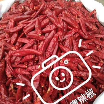 天鹰椒干辣椒  中辣型三樱椒辣椒朝天椒