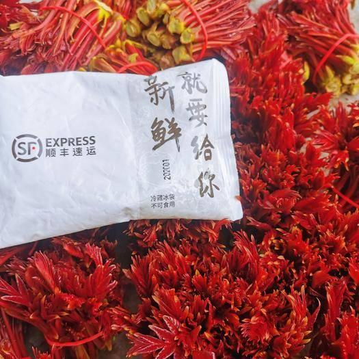 达州大竹县红香椿芽 9~12cm