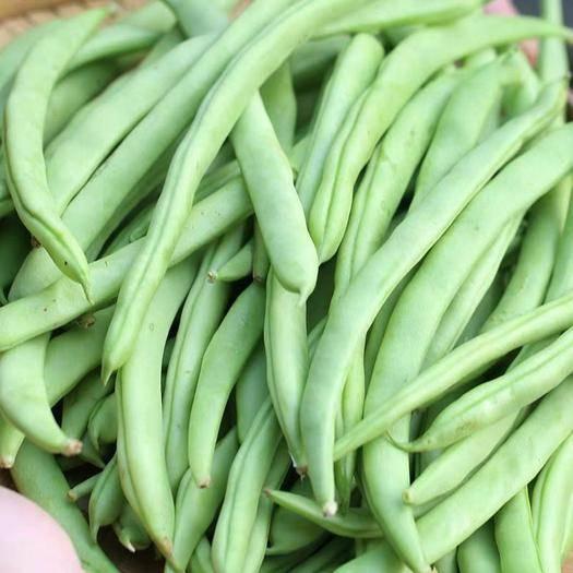 台州温岭市 山东新鲜蔬菜类芸豆角新鲜四季豆无筋豆扁豆生鲜特价蔬菜荷兰豆