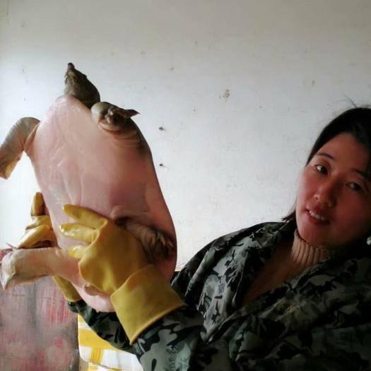 抚州黎川县 8年以上老甲鱼现抓现卖