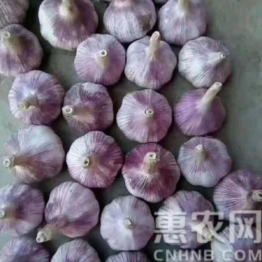 济宁金乡县 金乡大蒜,一吨起售、各种规、格各种包、代全国各地市场。