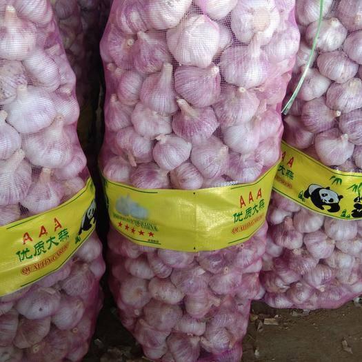 濟寧金鄉縣 山東 金鄉精品大蒜、一噸起售、產地直銷、代發全國各地市場