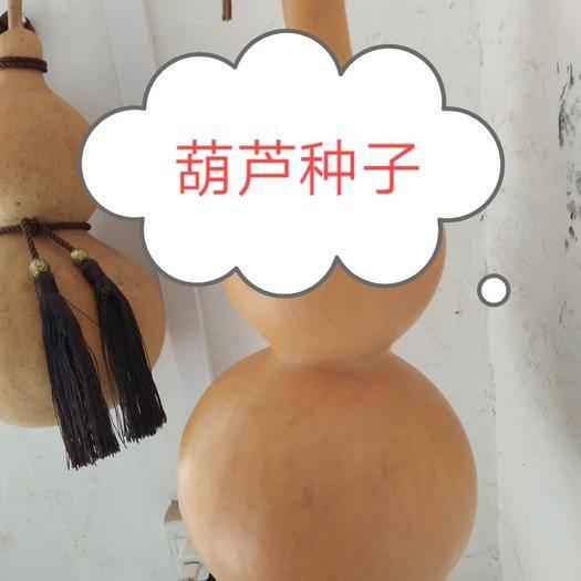 聊城 葫芦种子