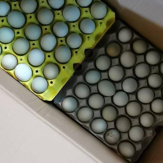 上海杨浦 鸡蛋 绿壳鸡蛋乌骨鸡蛋专业批发一件代发