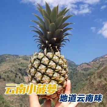 【坏果包赔】香水小菠萝 基地直邮