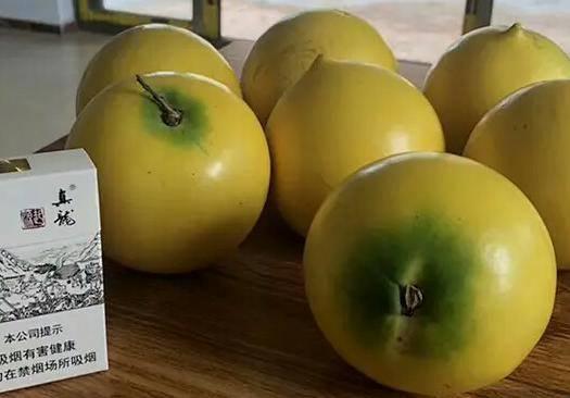 钦州灵山县黄晶果苗 带杯带叶包邮,种植2~3年可结果
