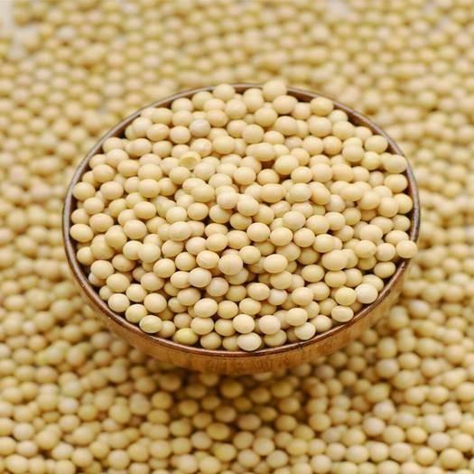忻州原平市有机黄豆 19年农村非转基因黄豆  筛选机精选黄豆无杂质 十斤起发
