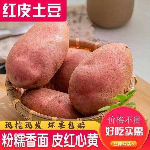 安陽縣 新鮮紅皮黃心土豆馬鈴薯洋芋精品土豆5/10斤裝一件代發包郵