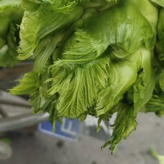 成都郫都区四川儿菜 2.0斤以上