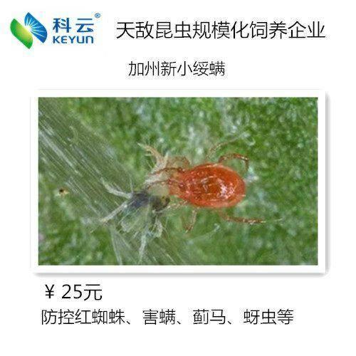 济源市捕食螨 防控各类作物上的红蜘蛛、害螨、茶黄螨、蓟马、蚜虫等