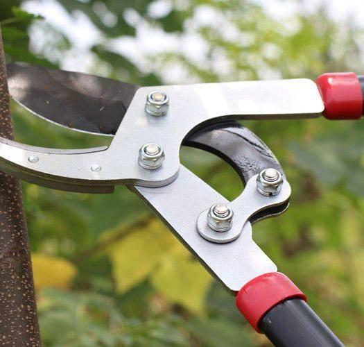 杭州修枝剪刀 进口修枝剪粗枝剪 伸缩大力剪高枝剪树枝剪刀果树剪园艺园林工具