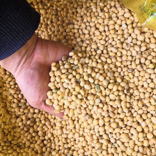 贵阳修文县黄大豆 安徽黄豆 豆制品专用 产地供货 贵州一级批发 98.5斤/袋