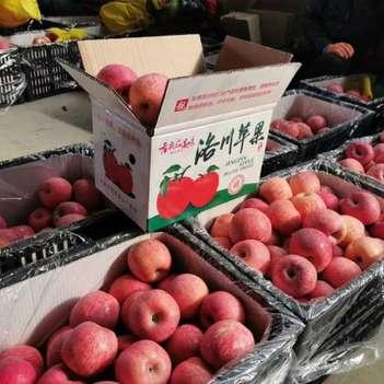 陕西红富士苹果脆甜新鲜水果一件代发,大宗批发对接各大市场。