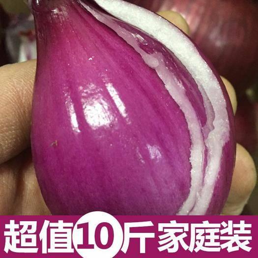 安阳安阳县 现挖紫皮洋葱农家自种圆葱新鲜蔬菜3/5/10斤电商批发包邮