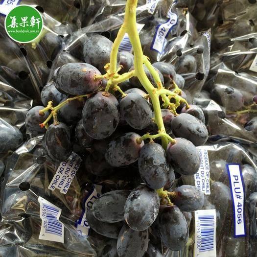 广州 智利进口无籽黑提8.2kg原箱批发 新鲜进口水果黑葡萄货源