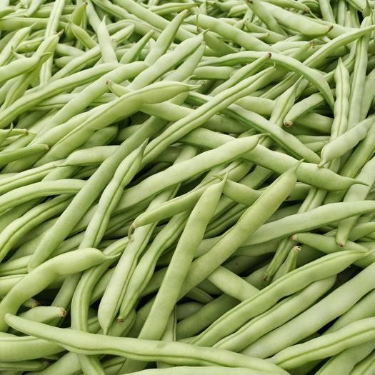 惠州博罗县无筋四季豆 15cm以上