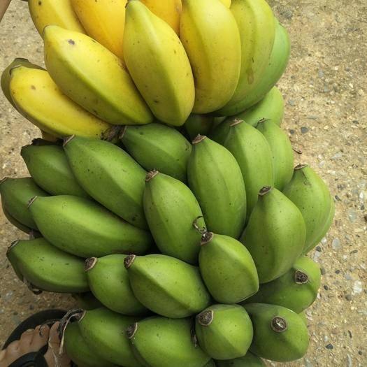 南寧西鄉塘區 產地直銷小米蕉,一手貨源,支持一件代發