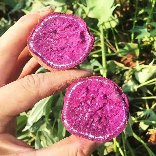 茂名 萬畝紫薯地瓜種植基地,歡迎各位老板訂購