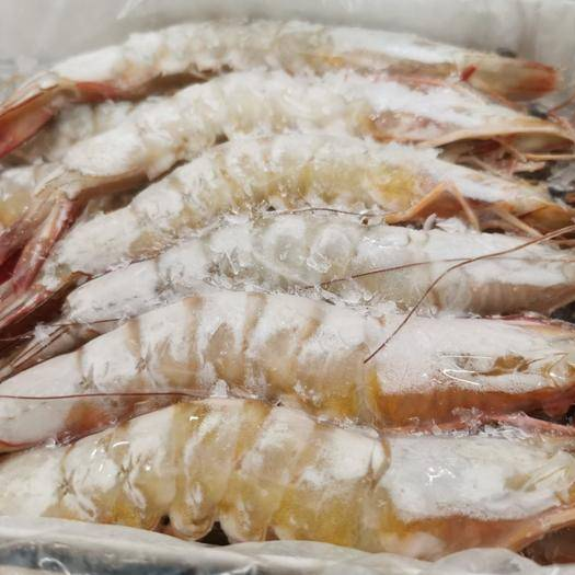 北海 明虾