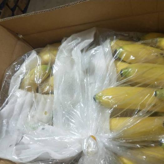 邯郸 常年大量供应云南香蕉,高中低档都有