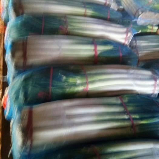 潍坊安丘市 大葱日本钢葱铁杆毛葱净葱大量出货按需加工