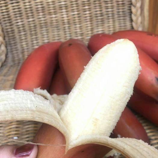 南寧西鄉塘區 紅香蕉紅皮香蕉 美人蕉 火龍蕉非香蕉米蕉芭蕉