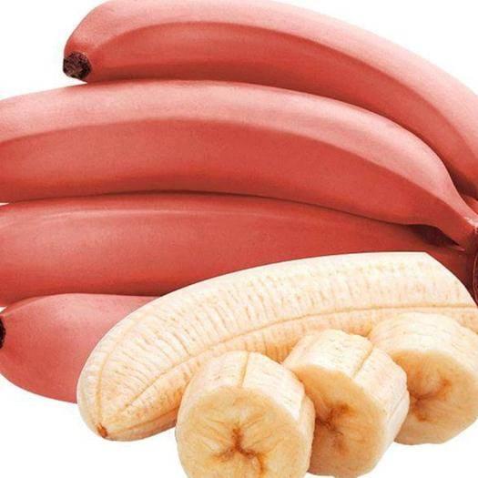淮北濉溪县 红皮香蕉当季鲜果