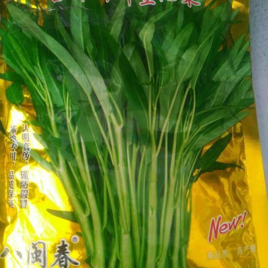 济南历城区 台种竹叶空心菜种子500克