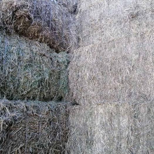 呼伦贝尔海拉尔区苜蓿草 苜蓿含杂草价格低