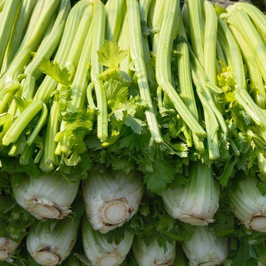 上海浦东新 精品西芹!!新鲜绿色当日采摘!!研究生帮父母卖菜,谢谢大家