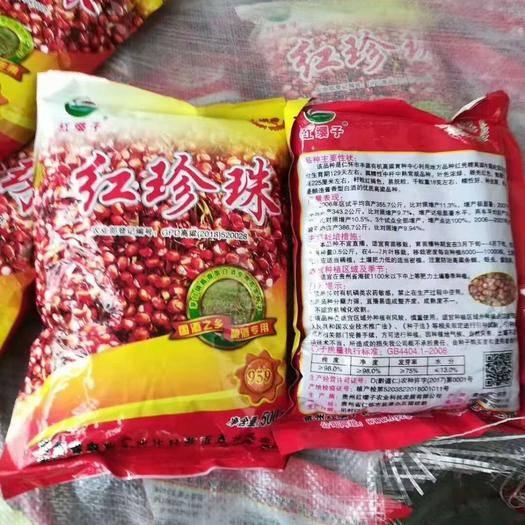 滄州黃驊市 各種訂單高粱種子