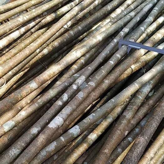 駐馬店驛城區 三公分左右柳樹大量供應