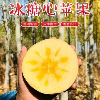 嫁接冰糖心苹果树苗  当年结果  基地直销现挖现发品种纯正