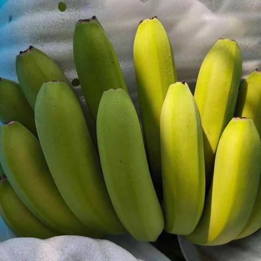 桂林兴安县 不打催熟剂不放乙烯10斤广西农家种植桂香1号青皮香蕉应季水