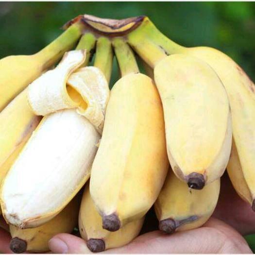 南寧西鄉塘區 越南粉蕉西貢蕉蘋果蕉非小米蕉香蕉牛蕉