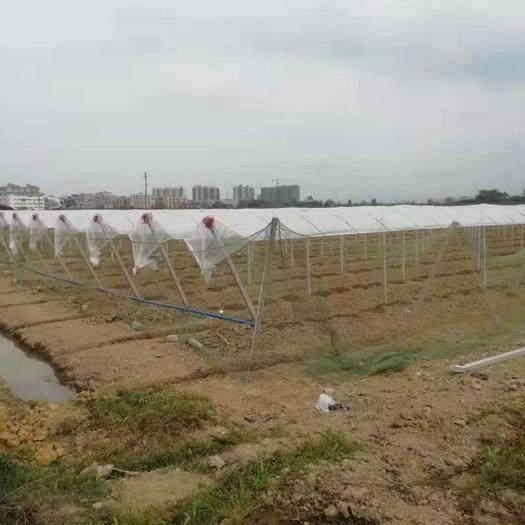 兴安县农技人员 架子搭建