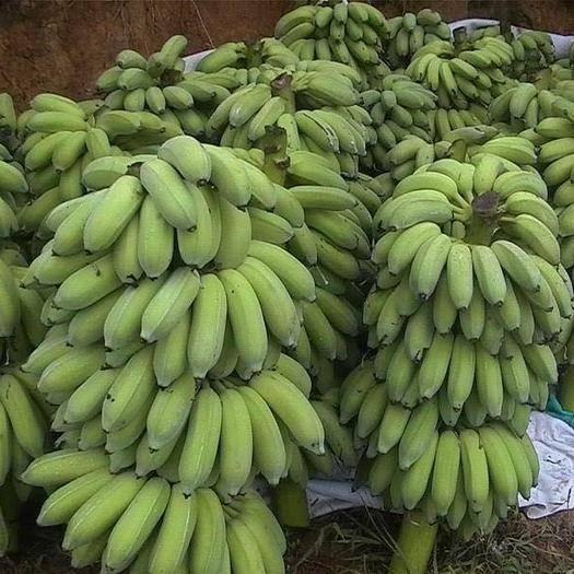 湛江徐聞縣 大量供應香蕉 ,粉蕉,芭蕉,米蕉,產地直銷,一手貨源