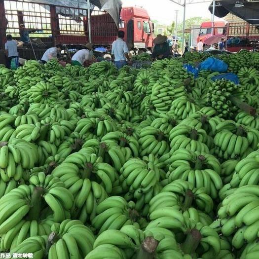 雷州市 香甜可口的雷州巴西香蕉,对消化绝对是杠杠的