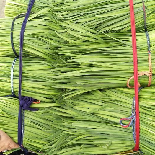 惠州博罗县韭苔 二茬 30~35cm